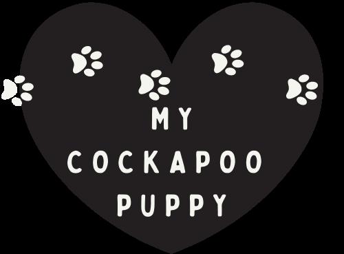 My Cockapoo Puppy